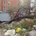 South Street Seaport downed tree